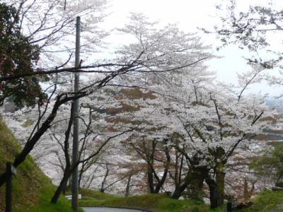 二本松の霞ヶ城公園28