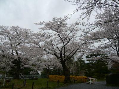 二本松の霞ヶ城公園29