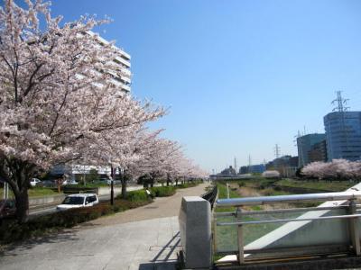 労災病院前川沿い