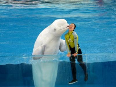 白イルカのキス