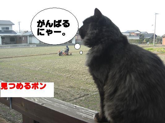 猫_002