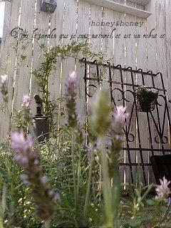 garden101.jpg