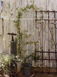 garden103.jpg