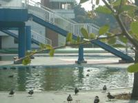 鳥のプール