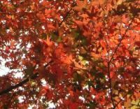 総合公園の紅葉