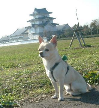 関宿城 水辺公園