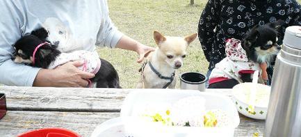 八重桜ピクニック