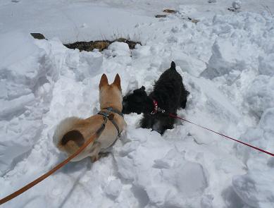 お友達と雪遊び