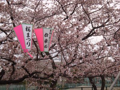浅草・隅田公園・桜橋から桜とスカイツリー