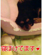 20080116085135.jpg