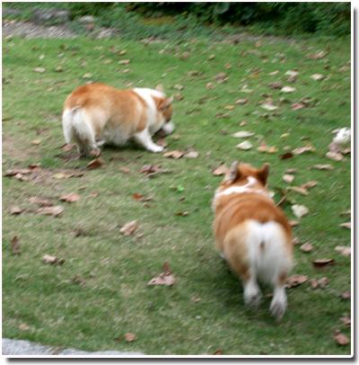 庭へ走り出す