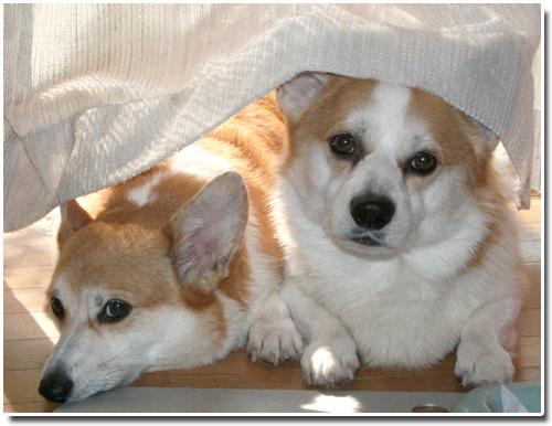 洗い立てのカーテンの下て#12441;