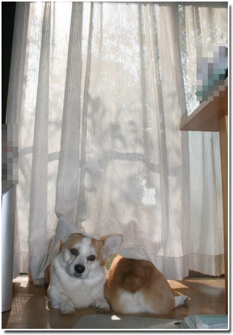 洗い立てのカーテンの下て#12441;2
