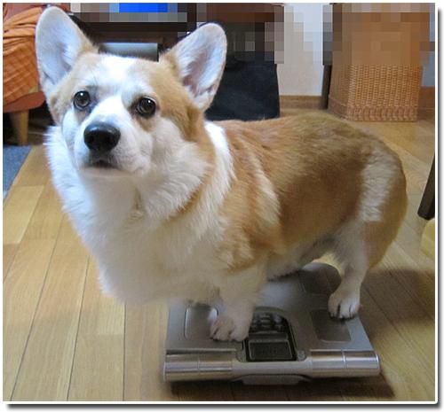 体重測定リッチ