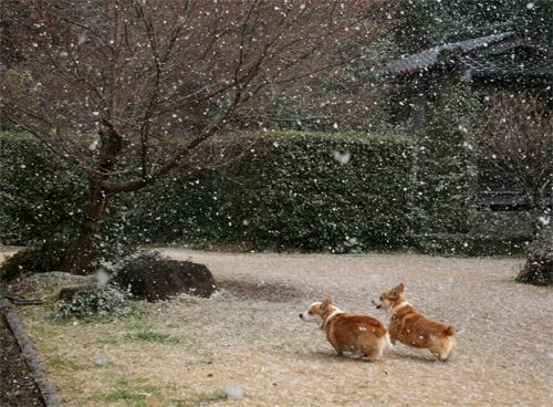 2012-0202雪