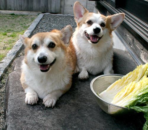 白菜と2ショット2