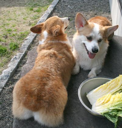 白菜と2ショット