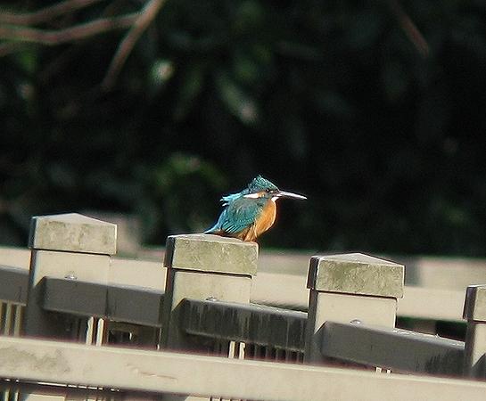 2008_01261月26デジス河~300