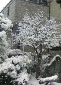 雪の景色a