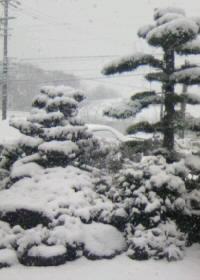 雪の景色b