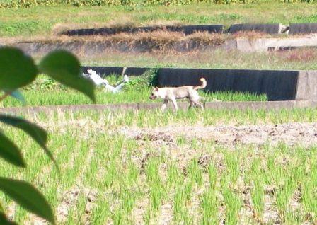 若い雄犬。他に雄犬3頭、雌犬2頭をよく見かけます