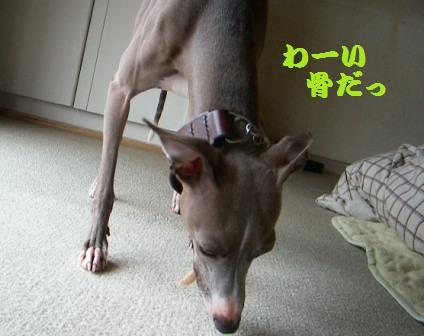 なんで犬は骨が好きなんでしょう?
