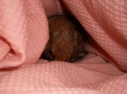 巣箱に比べ、自然の巣穴に近い形なので安心感があるらしい