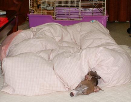 人間のように寝るトト(やらせ無し)