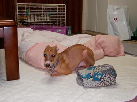 トトは、この寝方出来ません(いつも片足伸ばしたまま)