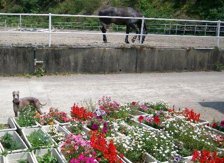 お花とボクと、ときどき馬
