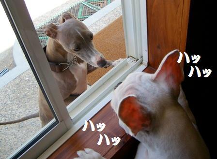 窓越しのご挨拶