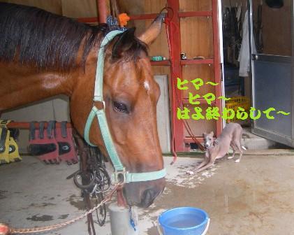 馬さん乾燥中