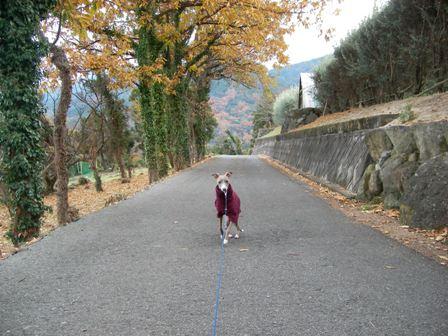 お散歩コースに最適