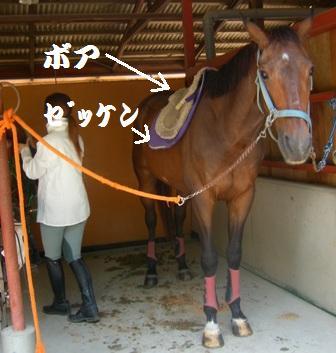 ⑤鞍(くら)装着