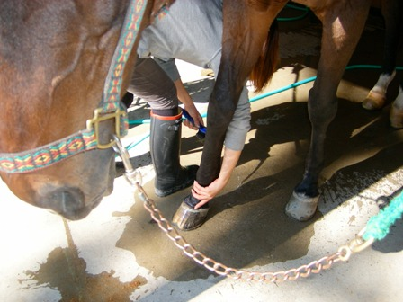 ②蹄(ひづめ)、足を洗う