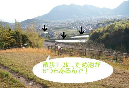 香川の特徴:ため池多し