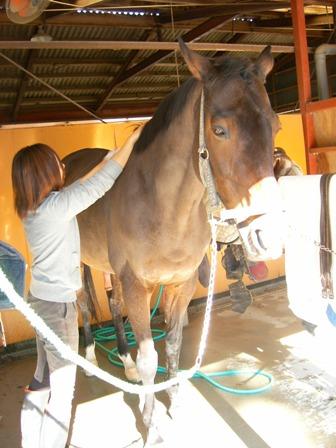 馬の背中は高いから、チビの私は大変。