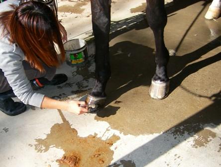 ⑥蹄油(ていゆ)を塗る