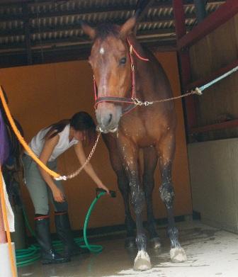 水たまりを走って、汚れちゃった馬さん