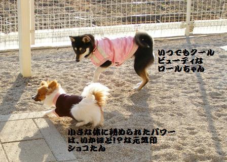 ショコラちゃん&ロールちゃん