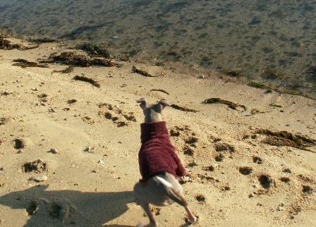 打ち寄せる藻屑と闘うトト