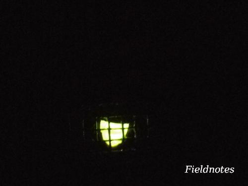 間近で見たゲンジボタルの光[橿原市昆虫館]