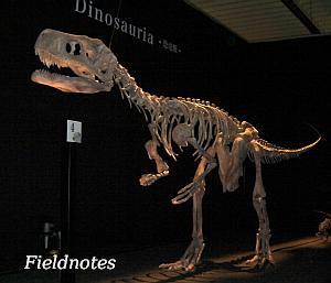 三畳紀の直立した二足歩行の恐竜類のフレングエリサウルス