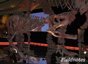 三畳紀の直立した四足歩行のクルロタルシ類のファソラスクス