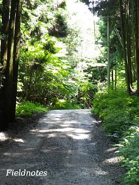 サワガニがいた金剛山の黒栂谷道
