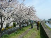 桜並木_01_2