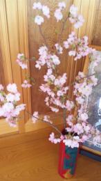 H23神代曙桜