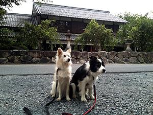 カラハルin近江八幡