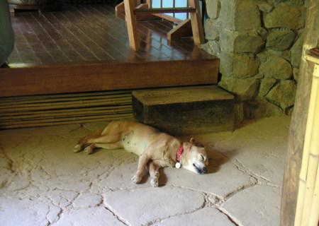 現在の土間で寝る先代ワンコ