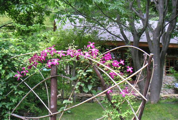 竹フェンスとクレマチス
